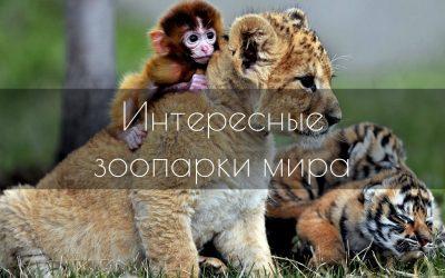 Топ-10 самых необычных зоопарков в мире