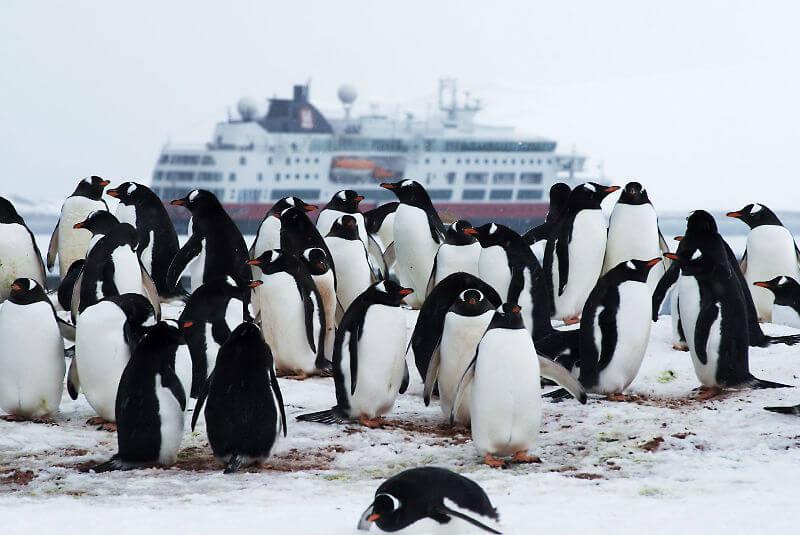 На круизном лайнере в Антарктиду
