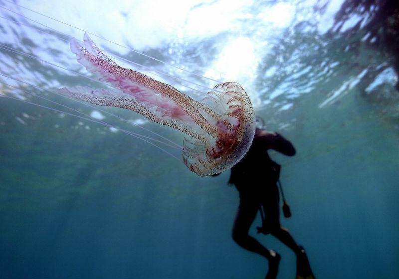 Медузы атакуют туристов на Гоа