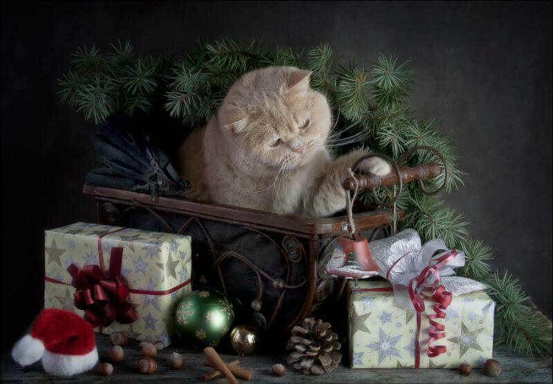 За Новогодними подарками в Кострому