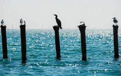 Черное море становится лучше