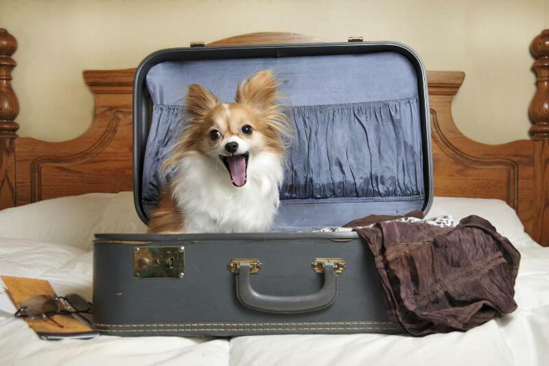 Приют для животных в аэропорту