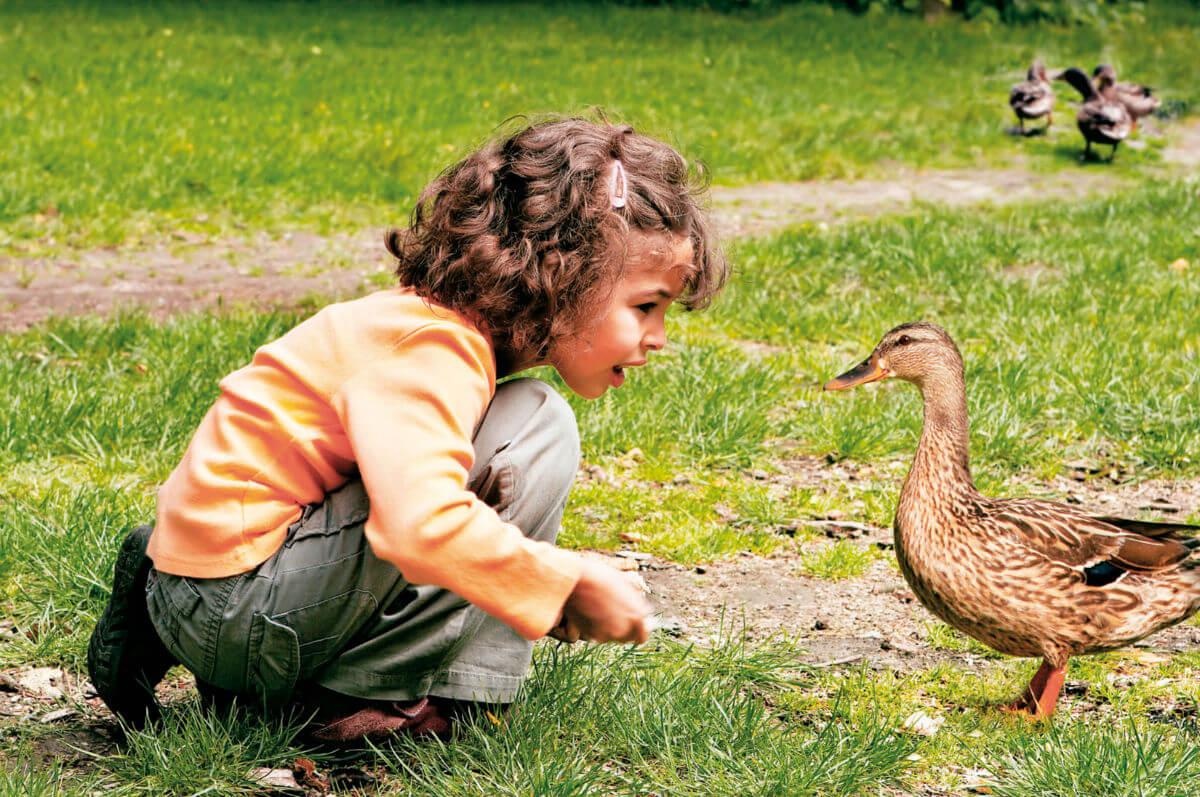 В Италии за любовь к птичкам придется заплатить