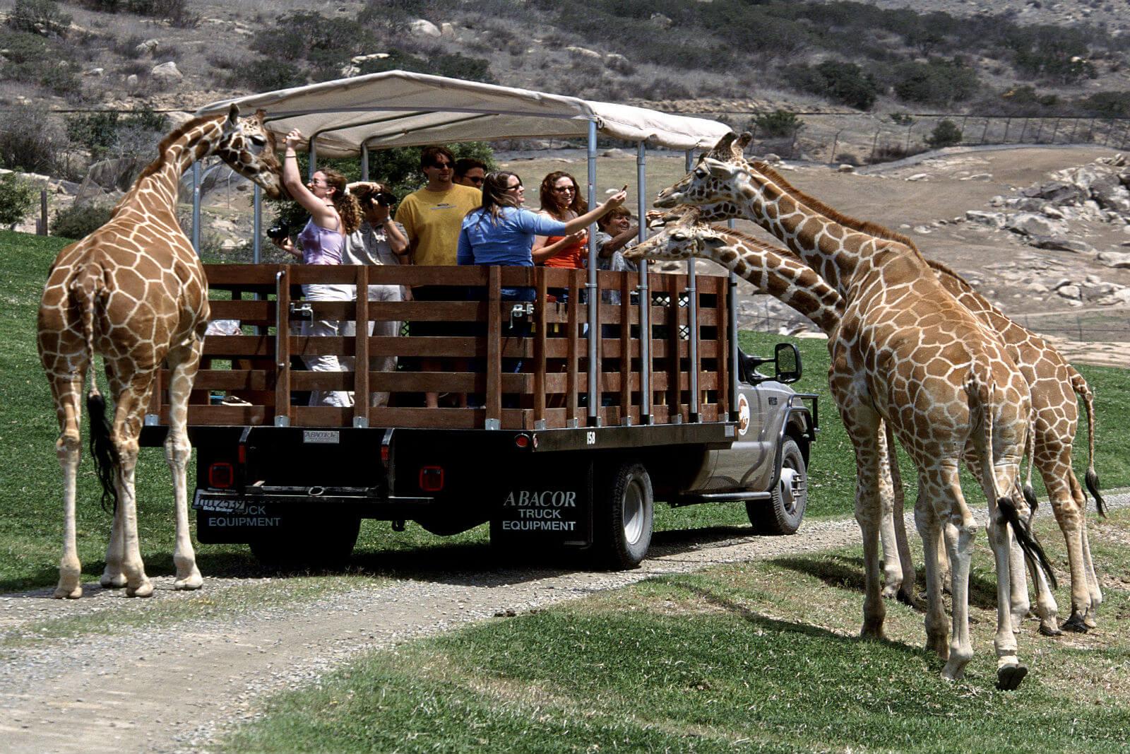 Зоопарк Сан-Диего - красивый рай для семьи.
