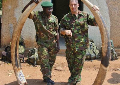 Огромные бивни слонов имеют высокую стоимость