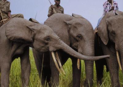 Слоны в Гарамба в тренировочной слоновьей школе