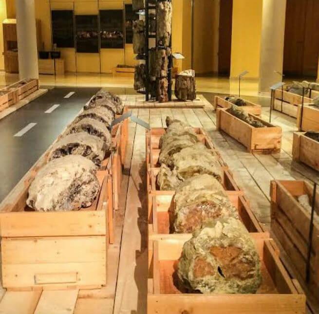 Выставка окаменелостей в Греции