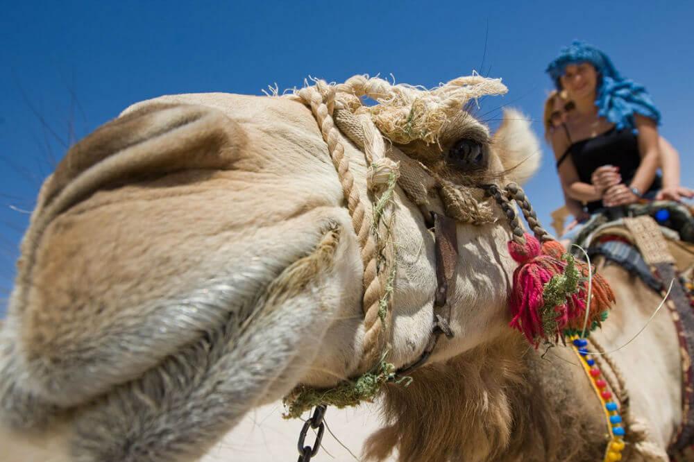 Русские туристы поедут в Египет не скоро