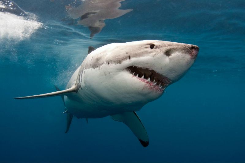 Мальорку атаковала акула