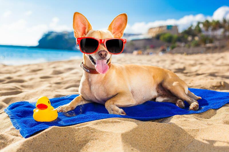 Пляж для собак выделили в Испании