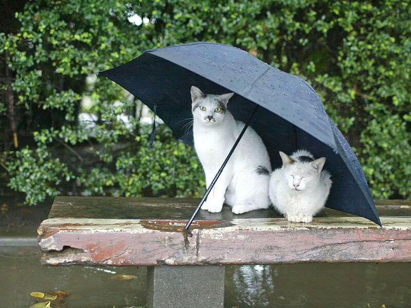 И снова непогода