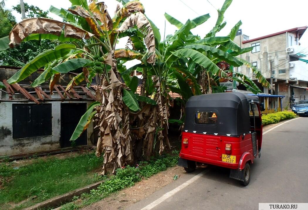 Шри-Ланка — отзыв о перелете и трансфере