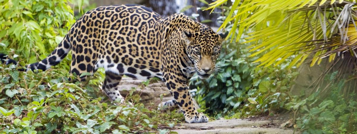 Топ-10 самые большие зоопарки мира
