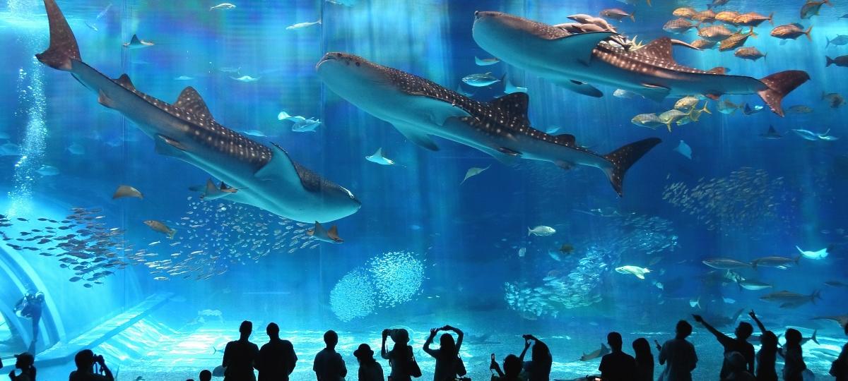 Самые необычные аквариумы в мире
