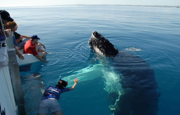 В январе Доминикана приглашает туристов понаблюдать за китами