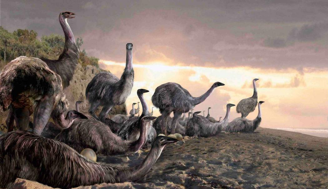 Вымершая птица Новой Зеландии