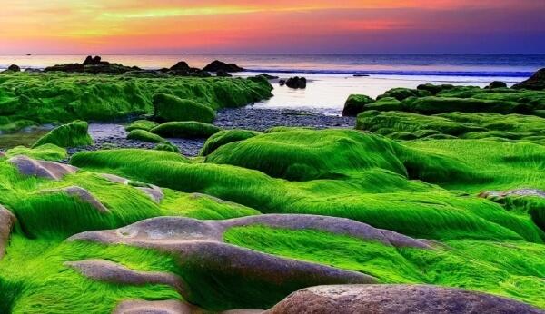 Многие туристы сравнивают его с зеленым лугом в море