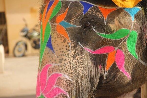 Индия готовится к проведению фестиваля слонов