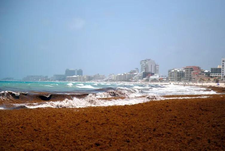 Мексиканские пляжи захламлены водорослями