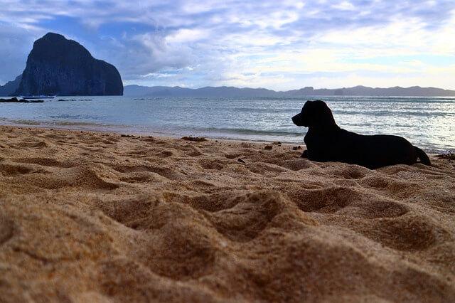 Норвежская путешественница умерла от бешенства