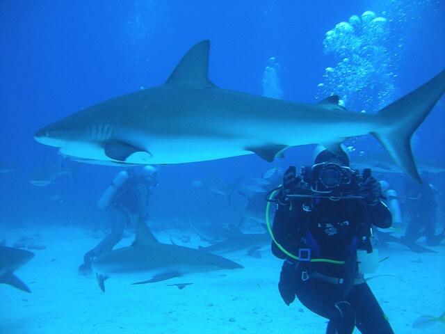 Акулы растерзали туристку на Багамских островах