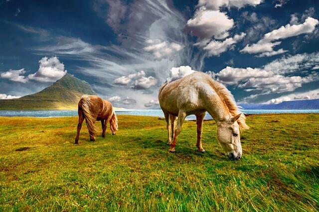Исландия идет на уступки по привлечению туристов