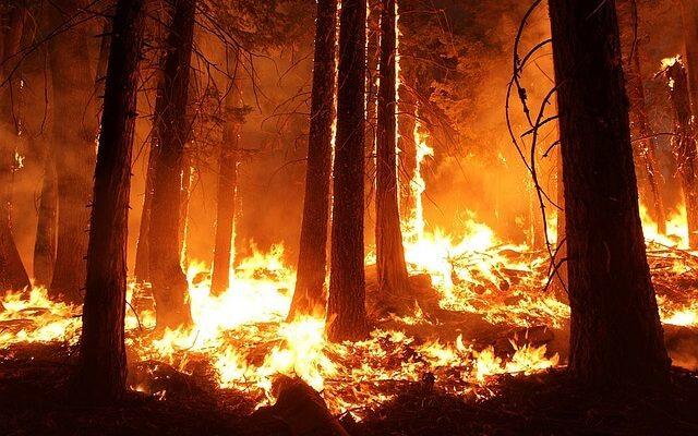 Рядом с популярными курортами Турции бушуют лесные пожары