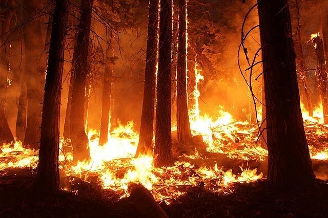 В Турции бушуют лесные пожары