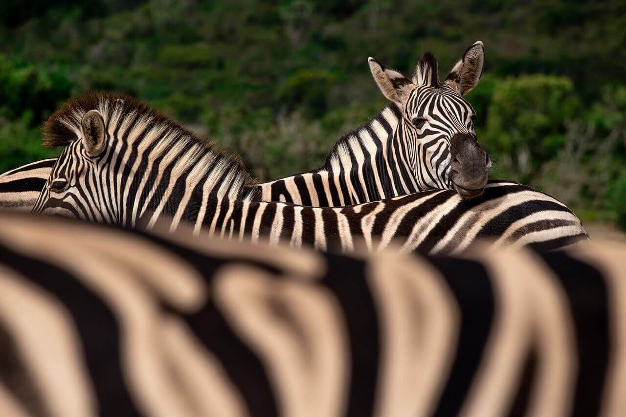 Животные в ЮАР