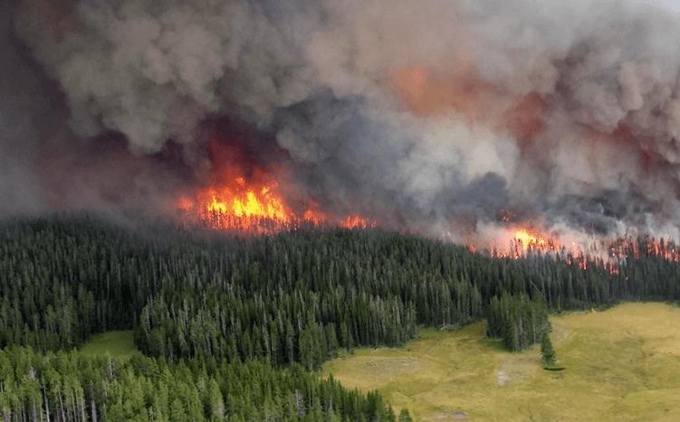 Пожары в Сибири могут вызвать мировую катастрофу
