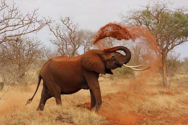 Слон в Намибии