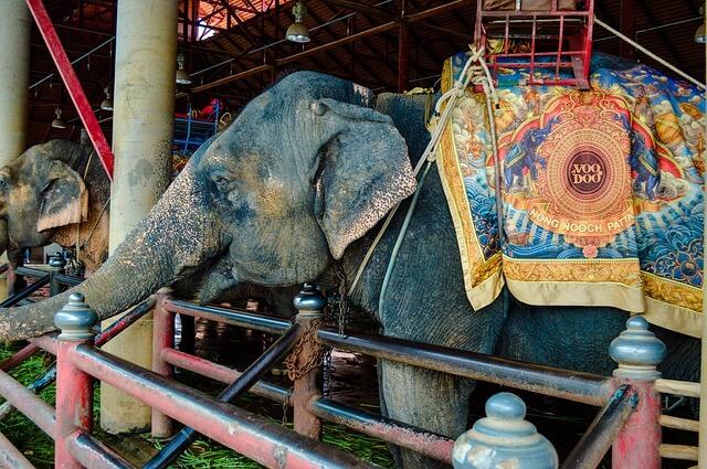 Слоны в Камбодже