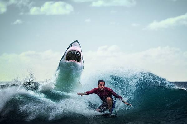 В Австралии на туристов напала акула
