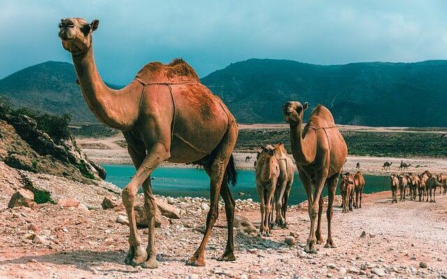 Власти Омана приняли решение полностью отменить визы