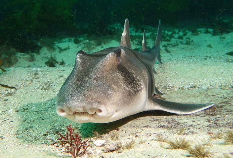 Бычья акула напала на туриста