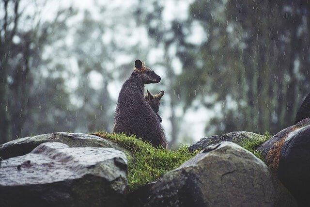 Дожди в Австралии