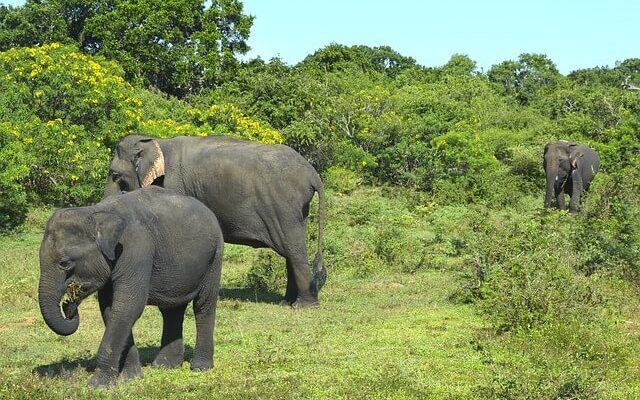 На Шри-Ланке слон атаковал машину с туристами