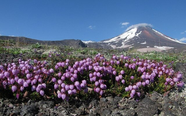 На Камчатке открылся для туристов Авачинский вулкан