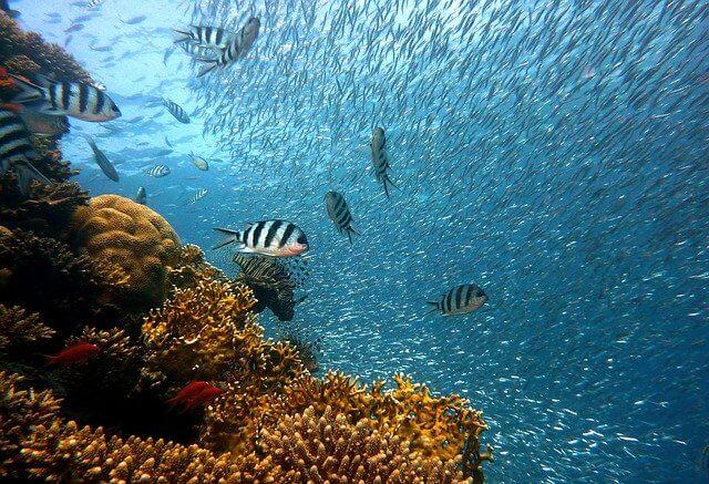 Мальдивы подводный мир