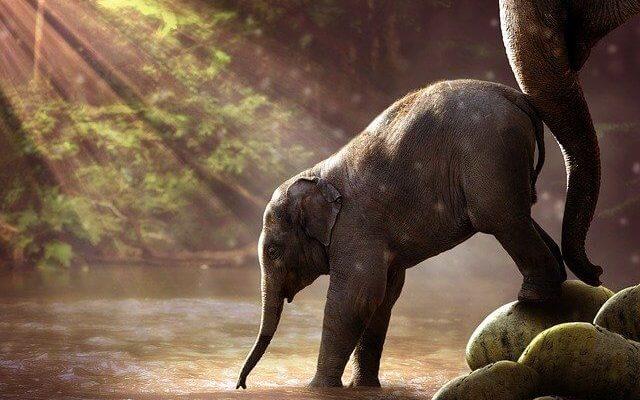 Слоны в Таиланде под серьёзной угрозой