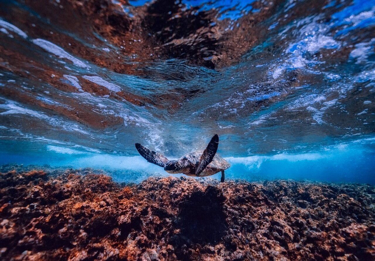 кораллы и морская черепаха