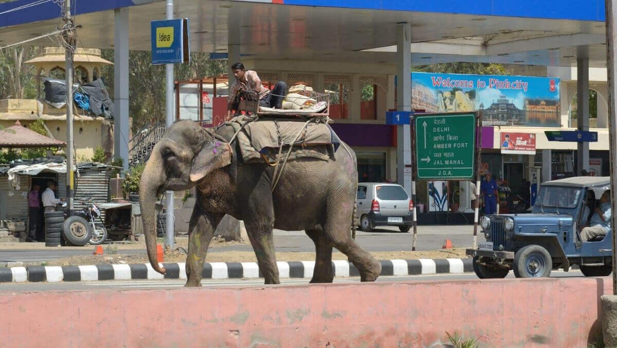 Слон на дороге в Индии