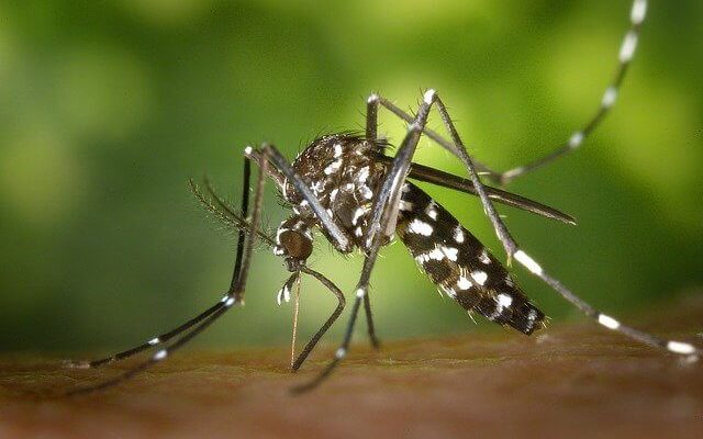 В Турции обнаружены опасные комары
