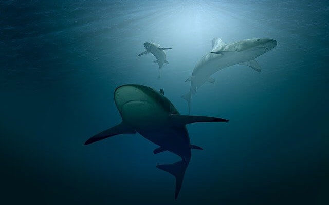 В Египте акула напала на трех человек