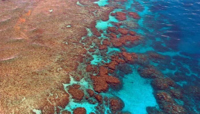 Большой Барьерный риф стремительно теряет свои кораллы
