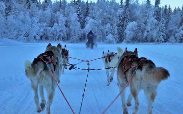 Лапландия на грани разорения, а Санта-Клаус не будет посещать детей из-за ограничений