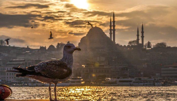 Власти Турции не планируют закрывать страну для иностранцев