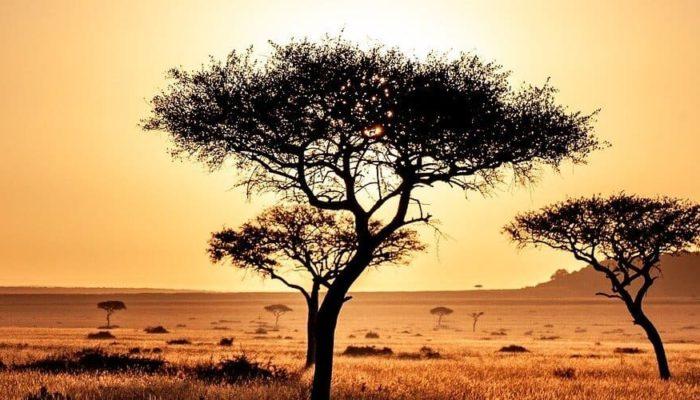 Кения готова начать прием туристов из России