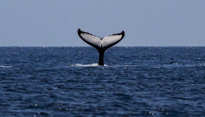 В США дайвера проглотил кит, но он смог выжить