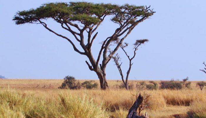 Запрет на авиасообщение с Танзанией продлен